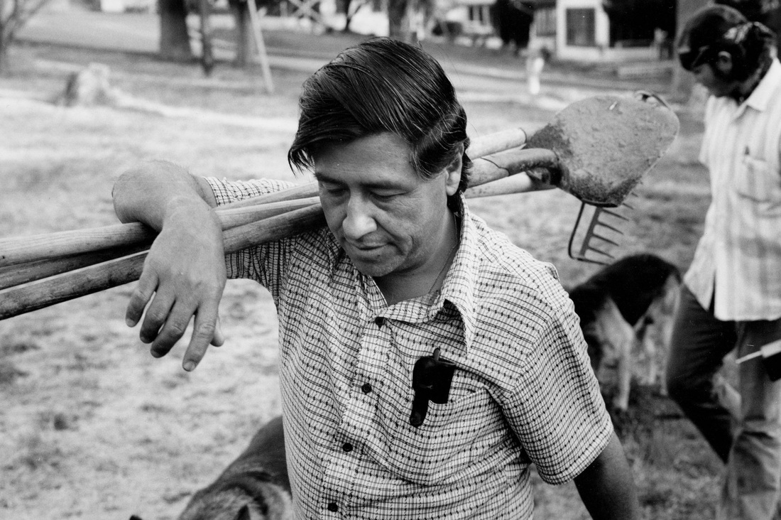 images cesar chavez international farm workers movement cesar chavez is shown here joining the farm workers as a sign of help he helps the farm workers do their daily job and he can barely do one day